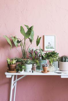 INTRATUIN Er is een perfecte plant voor elke plek in huis, van woonkamer tot badkamer, van lichte tot donkere standplaats. Lees er hier alles over.