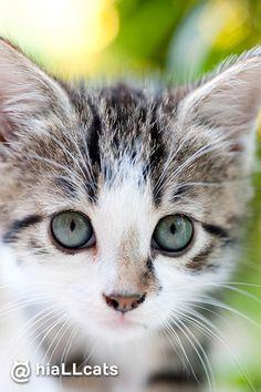 Woah! #kitty #purr #beautiful #cuties