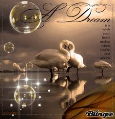 a dream is a wish your heart makes when you're fast asleep ( Cinderella)