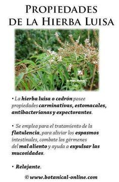 Propiedades del CEDRON o hierba luisa http://www.botanical-online.com/medicinalsmarialuisacastella.htm