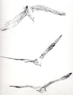 Jonathan Livingston Seagull by francyfra - Tattoos Ideas - Tattoo Jonathan Livingston Seagull, New Tattoos, Small Tattoos, Tatoos, Ave Tattoo, Seagull Tattoo, Bird Doodle, Tattoo Designs, Sea Birds