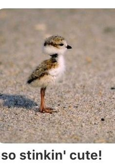 Cute Baby Animals That Can Make You Melt Photos) – Jane Hartman - Baby Animals Cute Birds, Pretty Birds, Beautiful Birds, Animals Beautiful, Small Birds, Cute Funny Animals, Cute Baby Animals, Animals And Pets, Cute Creatures