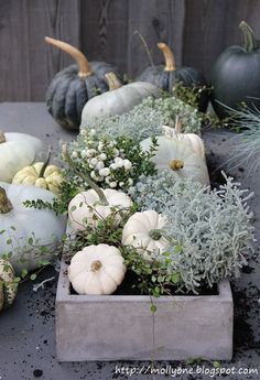 Gorgeous fall pumpkin vignette.
