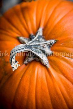 Pumpkin Photo Digital Download Fine Art by PatrickRabbatPhotos