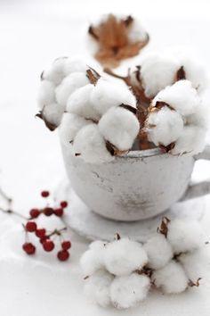 Algodon, texture silver and cotton Cotton Bouquet, Cotton Gin, Organic Cotton, Vibeke Design, Cotton House, Cotton Plant, Cotton Fields, Faux Flowers, Dried Flowers