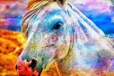 Horse Art (Oh, this is simply fantastic)!
