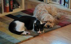 Tapis et animaux de compagnie