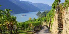 Wandern in NÖ: 8 Tipps für Wanderungen in Niederösterreich - HEROLD.at Austria, Golf Courses, Vineyard, Country Roads, In This Moment, Mountains, Canvas, Prints, Travel