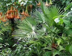 Tropical garden by Rhonda Clements