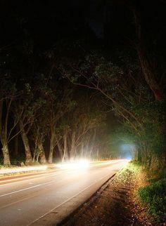 Beautiful Maluhia road Eucalyptus Tree Tunnel...to Poipu Beach, Kauai