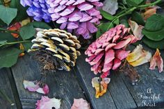 Let's Make Zinnia Flowers from Pine Cones!