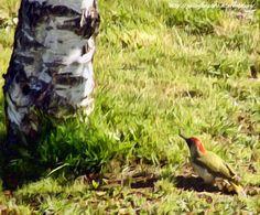Processed photos - birds seen from my window - ecco alcune elaborazioni fotografiche di immagini relative ad uccelli che ho fotografato dalla finestra :