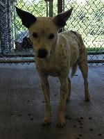 ***SUPER URGENT!!!*** - PLEASE SAVE ME!! - EU DATE: 7/31/2014 -- kodiak  Breed: Jack Russell Terrier / Mixed (mix breed) Age: Adult Gender: Male  Size: ,  Shelter Information:   Elizabethton Carter County Animal Shelter  135 Sycamore Shoals Dr   Elizabethton, TN  Shelter dog ID: D2014360 Contacts:  Phone: 423-547-6359  Name:  April Jones  email: animalshelter@cartercountytn.gov