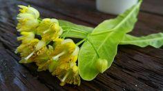 Celery, Vegetables, Plants, Vegetable Recipes, Flora, Plant, Planting