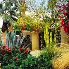 Driving around the streets of Palm Springs is a landscape designers dream. The colour, foliage and art of these gardens blew me away. I will be returning soon Palm Springs.