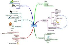 Mind Maps of homeopathic Medicines