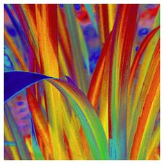 Vibrant, textured leaves in rainbow colors. All photographs are printed on professional, archival paper for a photograph with sharp details, and stunning colors that will last a lifetime.