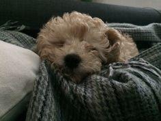 Billy | sleeping beauty ❤️