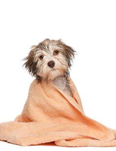 Dicas GuiaMais - Banho de Cachorro http://dicas.guiamais.com.br/2012/03/20/um-animal-para-chamar-de-seu/#