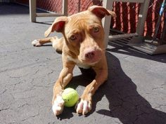 LIANNIE located in New York, NY has 6 days Left to Live. Adopt him now!