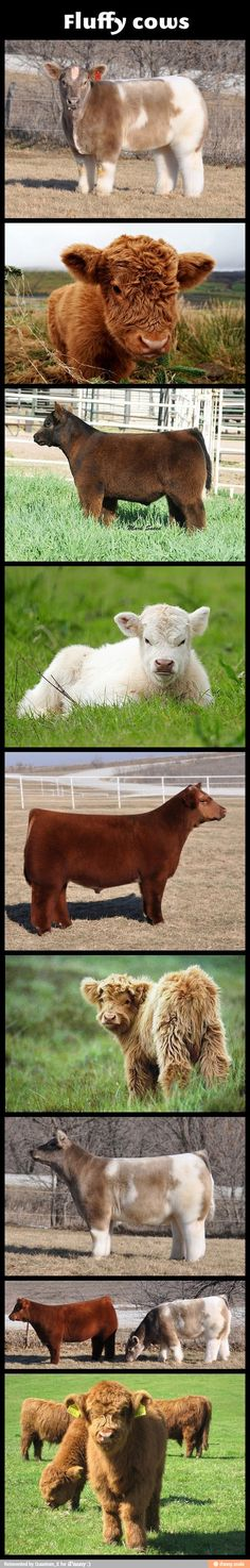 Holy fluffy cows!
