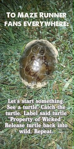 To the Gladers... MAZE RUNNER!!!!!!<<<EVERYONE DO THIS. Not sure that I see turtles very often but...
