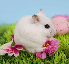 Hamble-bee the Djungarian dwarf hamster by hoschie on DeviantArt