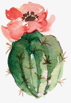 Flowering bonsai cactus, Watercolor Cactus, Flowering PNG Image