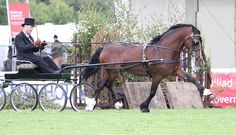 Photo Archive Royal Welsh Show Driving - Wagons - Stallion 2011 : Rainhill Welsh Cobs