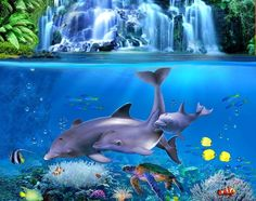 Duvet Bedding, Bed Duvet Covers, Aquarium, Fish, Pets, Wallpaper, Desktop, Animals, Beautiful