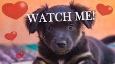 Joyful and sweet little black puppy dog Princess Leia, Little Princess, Black Puppy, Photography Portfolio, Joyful, Dogs And Puppies, Sweet, Happy, Art