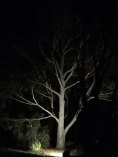 #treesinthedark