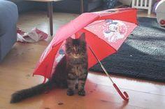 Globetrotter: Jordbær, - og den lille Egon med paraplyen