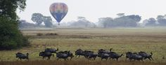 Save $1,130 each and get a free balloon safari in Zambia and Zimbabwe | iSafari.com