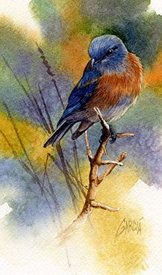 Western Bluebird by Joe Garcia Watercolor ~ 7 x 4.25