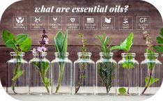 What Are Essential Oils, Sweet Orange Essential Oil, Lemongrass Essential Oil, Frankincense Essential Oil, Eucalyptus Essential Oil, Tea Tree Essential Oil, Organic Essential Oils, Best Oil For Skin, Oils For Skin