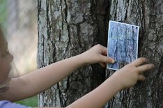 "Take photos of tree bark - print off photos and have kids try to find the tree. Could also do with leaves and many other things ""nature"" around campus. Forest School Activities, Nature Activities, Science Nature, Outdoor Activities, Outdoor Education, Outdoor Learning, Outdoor School, Outdoor Classroom, Tree Study"