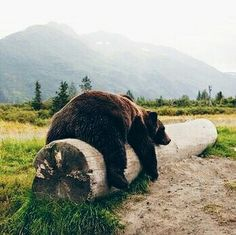 one tired bear