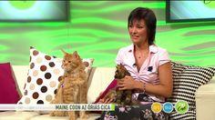 FEM3 CAFÉ / Számos legenda kering az óriás cicákról / fem3.hu