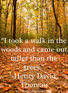 """I took a walk in the woods and came out taller than the trees."" - Henry David Thoreau"
