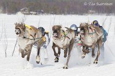 Reindeer Cup Finals Inari, Finland