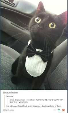 I most definitely need a collar and tie for my cat