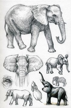 Elephant drawings | Sketches