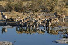 Namibia Gruppenreisen - Kleingruppenreisen und geführte Rundreisen. Gruppenurlaub beim Namibia Spezialisten buchen! Namibia Reisen in kleinen Gruppen.