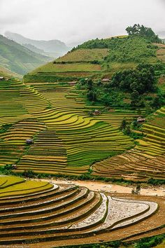 Sapa Región, Vietnam. Uno de (si no el más) ejemplos impresionantes de la agricultura intensiva. Esta es una gran hazaña física y antropológicamente, ya que demuestra cómo el uso extensivo de la tierra es en las sociedades Horticultura.