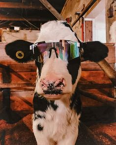 Cute Baby Cow, Baby Animals Super Cute, Baby Cows, Cute Cows, Cute Little Animals, Cute Funny Animals, Baby Farm Animals, Funny Pets, Fun Funny