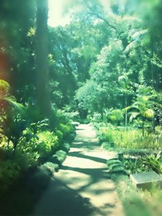 Jardim do Museu Imperial Petrópolis