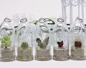Bulk Pack of GemSprouts for Events / Wedding Favor / Reception (Bullet Style) - Free Shipping