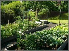 What a beautiful garden! Woven wire fencing around perimeter to keep out deer and other pests -- even hungry chickens.