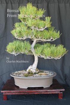 10 Bonsai Books Ideas Bonsai Bonsai Tree Bonsai Tree Care